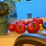 dads tomatoes